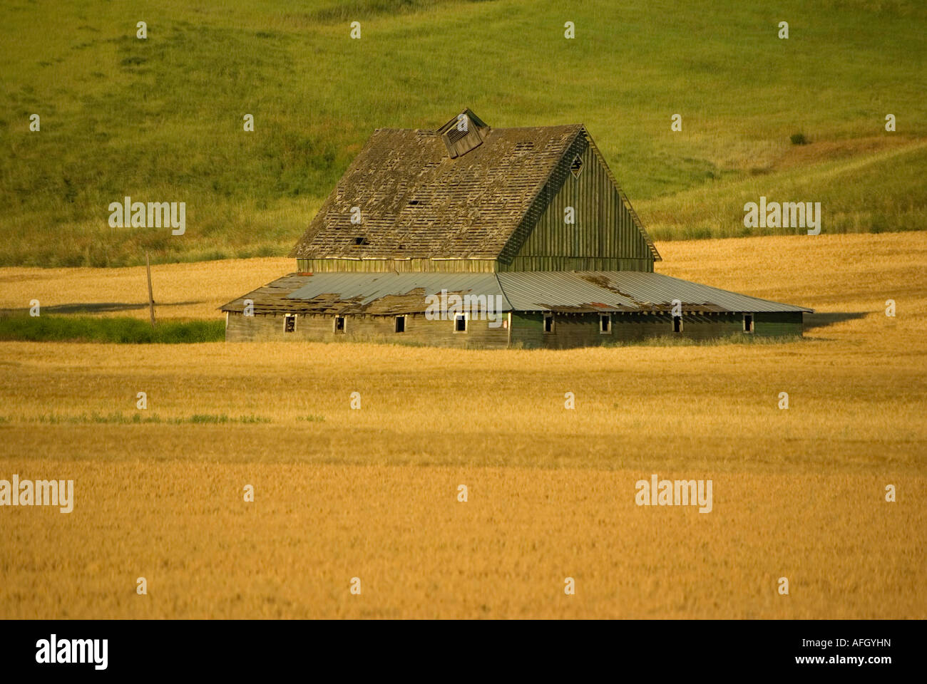 Palouse Wheat Field Eastern Washington State barn - Stock Image