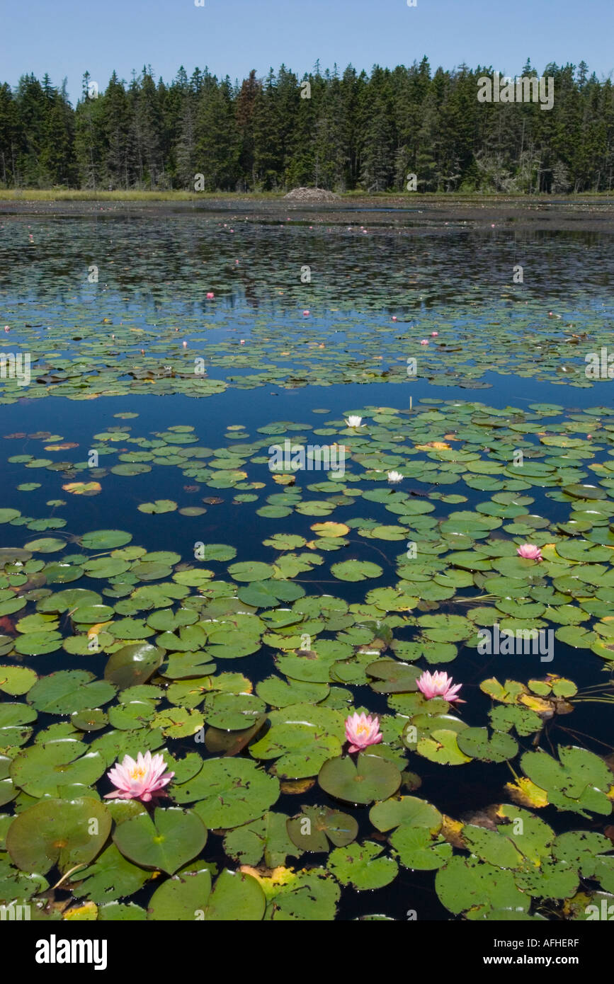 Ames Pond in Stonington, Maine, July 2006 - Stock Image