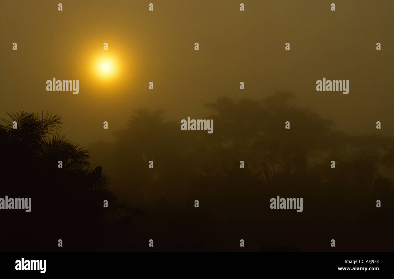 Sunrise and mist in tropical forest Zaire - Stock Image