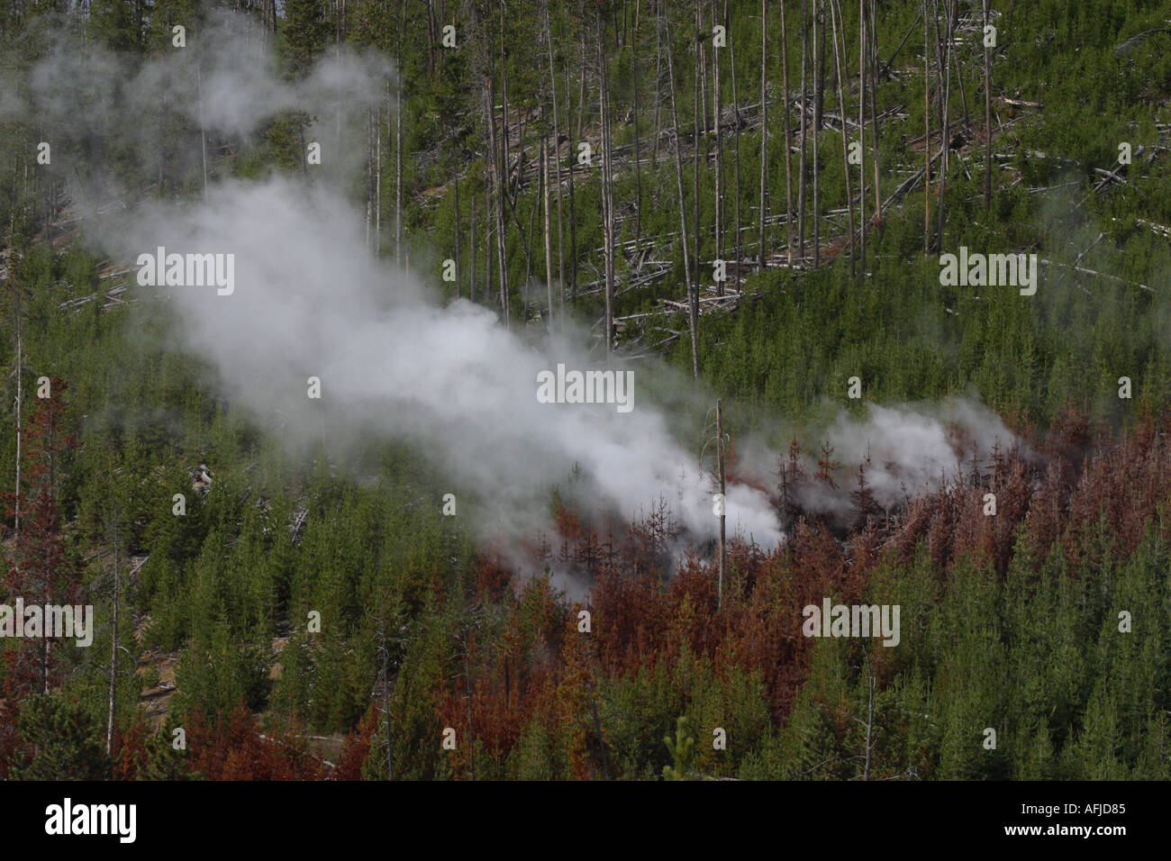 Smoke from fire in pine forest Yellowstone Nat Pk USA - Stock Image