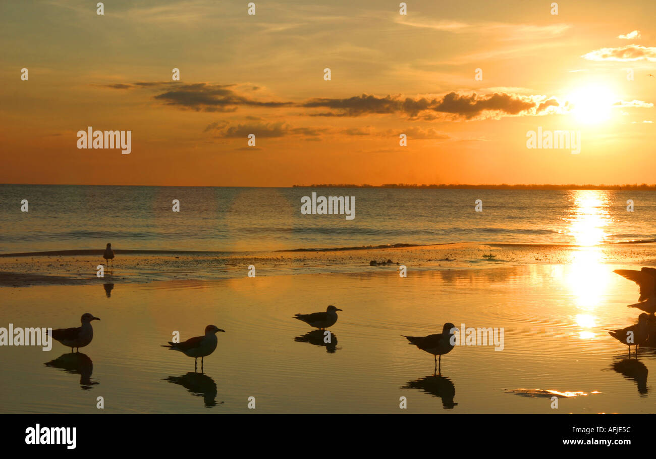 Seabirds on Fort Myers Beach in South West Florida  - Stock Image