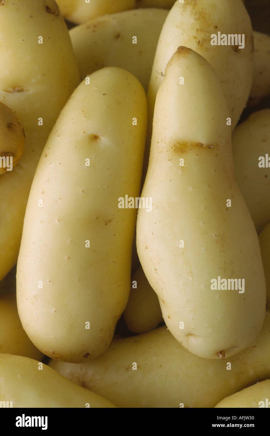 Solanum tuberosum 'Ratte'. AGM Washed early maincrop potatoes. Stock Photo