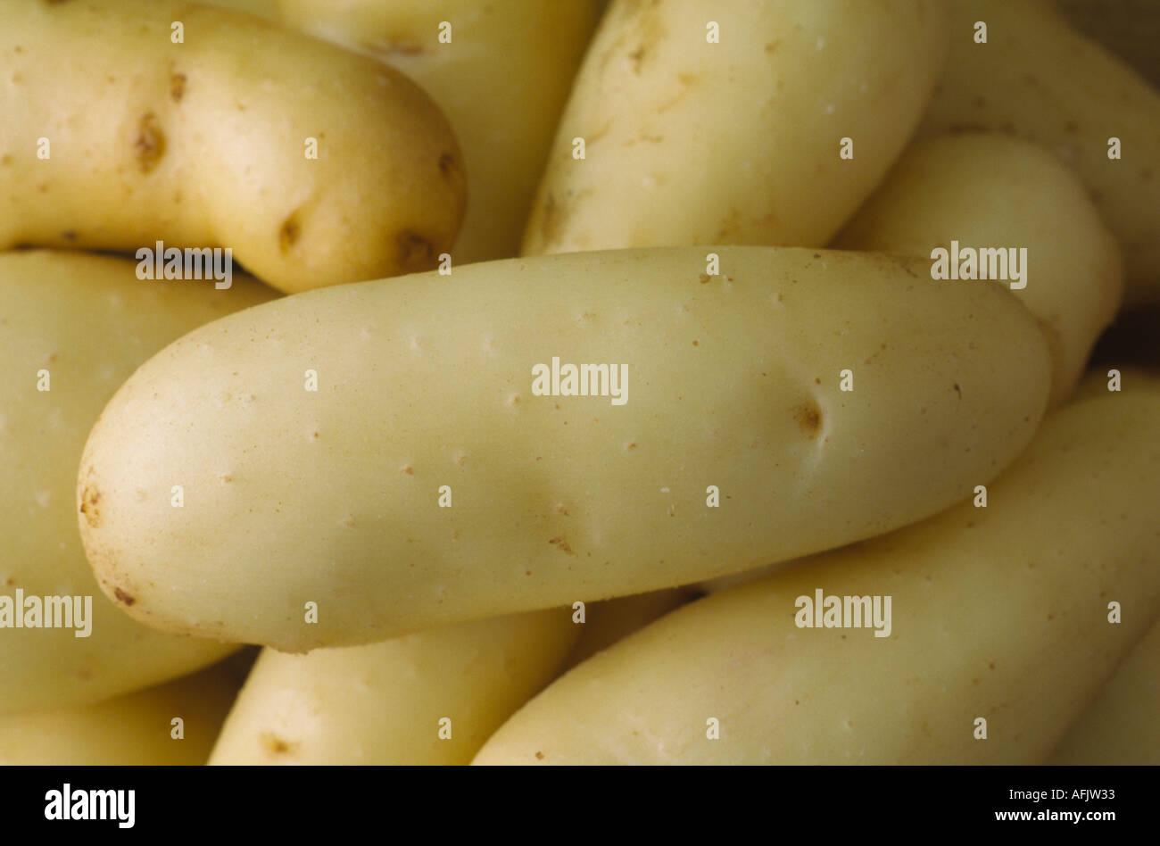 Solanum tuberosum 'Ratte'. AGM Washed early maincrop potatoes Stock Photo