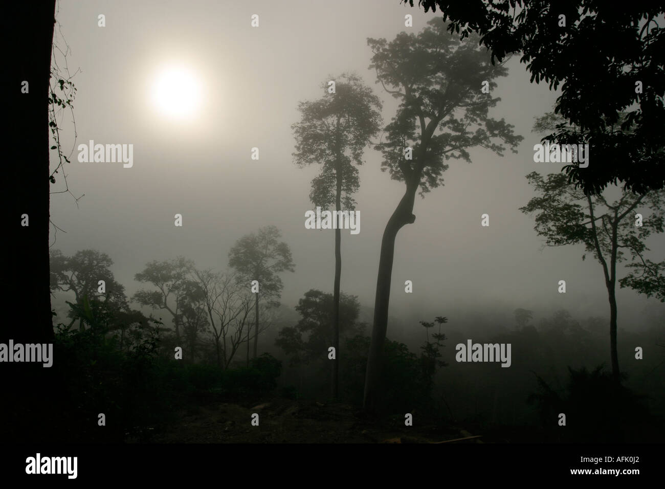 Early morning sunrise through mists and rainforest clouds, Ghana, West Africa - Stock Image