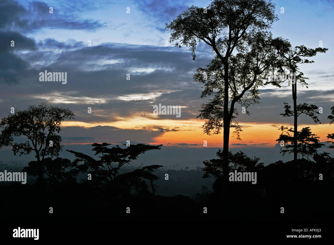 Dawn over Tropical  African Rainforest with mist clearing, Ghana, West Africa - Stock Image
