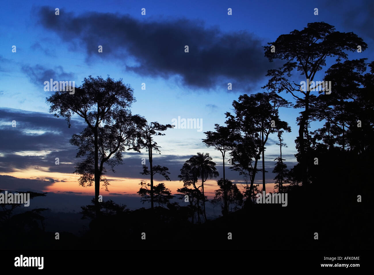 Dawn over African Tropical Rainforest with mist clearing, Ghana, West Africa - Stock Image