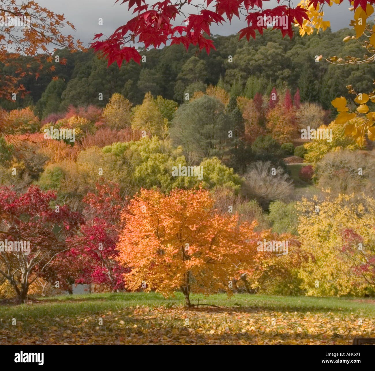 AUTUMN VIEW MOUNT LOFTY GARDENS ADELAIDE SOUTH AUSTRALIA Stock