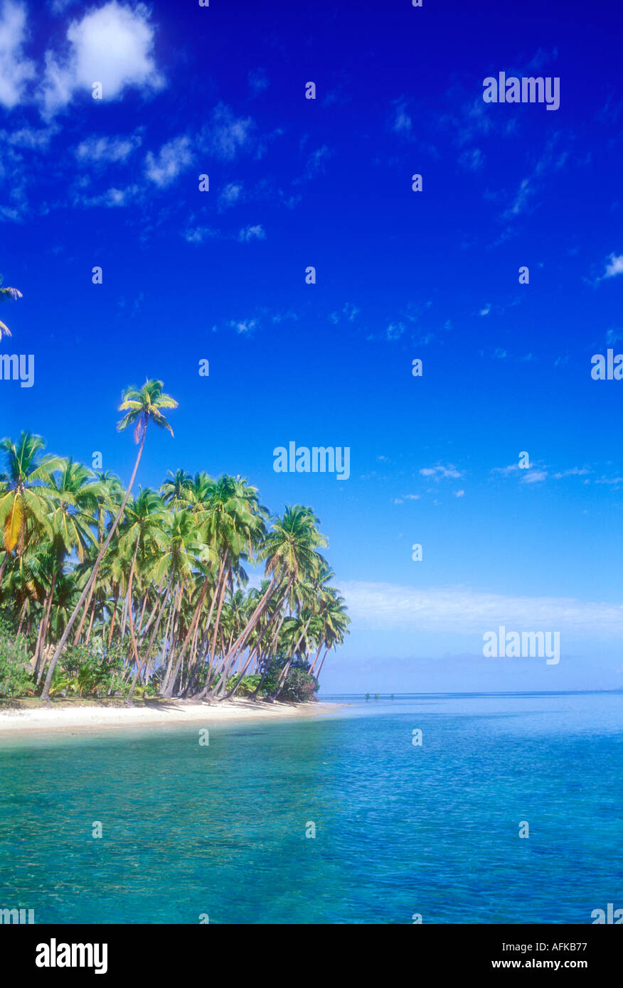 Palm trees on white tropical beach in Fiji South Pacific Ocean - Stock Image