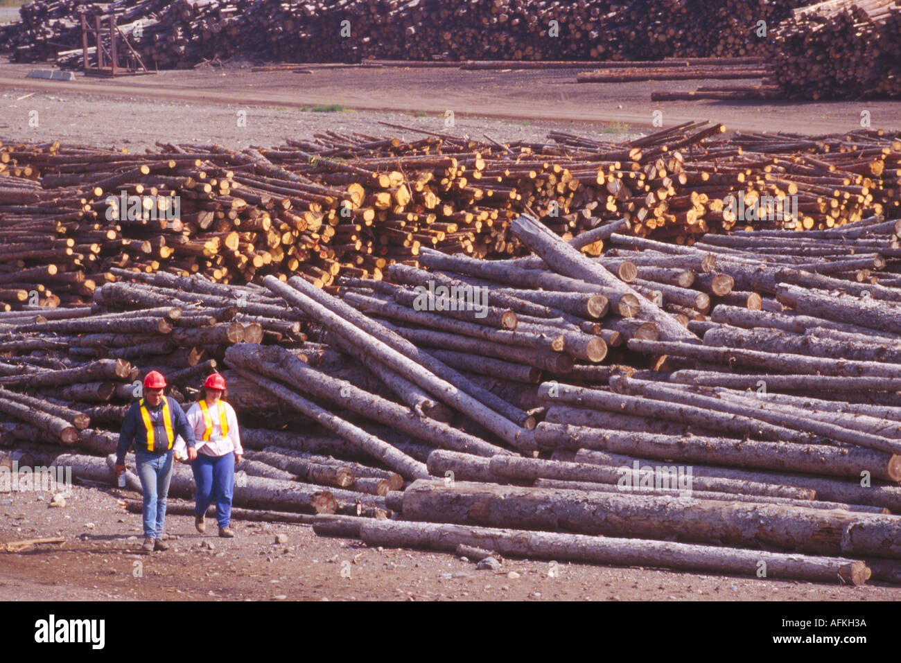 Male and Female Foresters at a Log Sorting Yard near Chetwynd in Northern British Columbia Canada - Stock Image