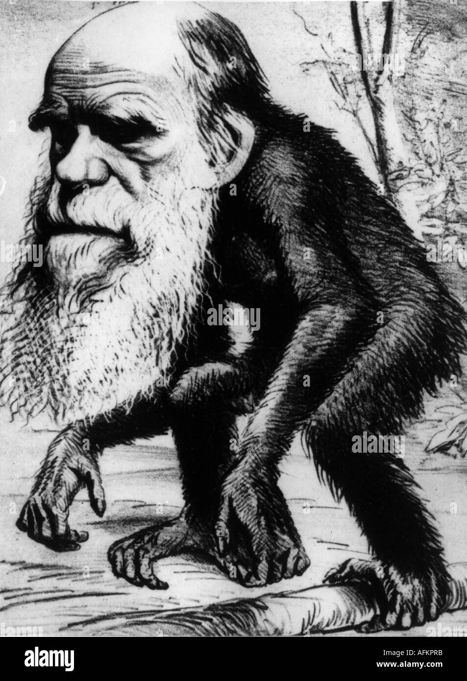 Darwin, Charles Robert, 12.2.1809 - 19.4.1882, British naturalist, caricature, as an ape, drawing, 19th century, Additional-Rights-Clearances-NA - Stock Image