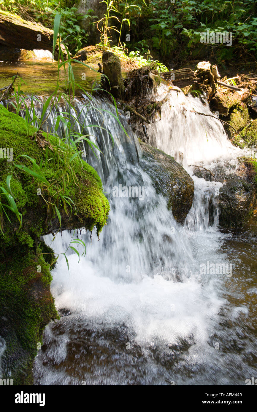 mountain stream running over mossy rocks in siberia foothills of Sayan's mountain range - Stock Image