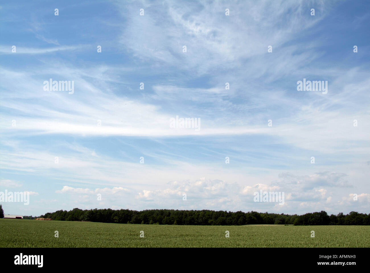 agriculture, in, Sweden, Swedish, field, sky, blue, crop, crops, farm, farming, field, sustainable, green, blue, sky, prosperous - Stock Image