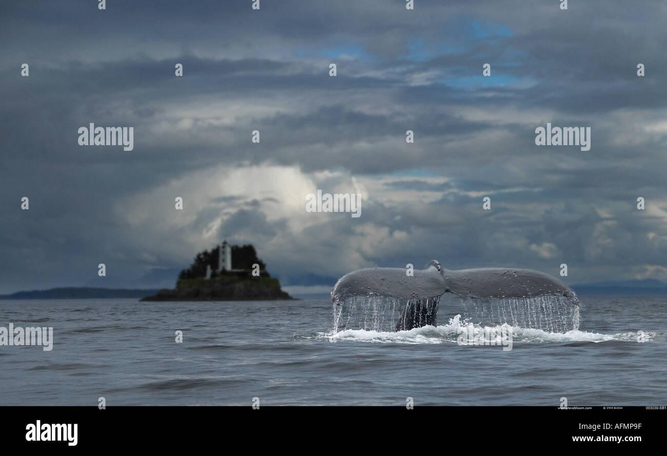 Humpback Whale and Five Fingers Lighthouse Petersberg Alaska - Stock Image
