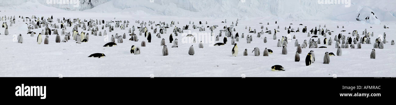 Aerial of an Emperor penguin colony Coulman Island Antarctica Stock Photo