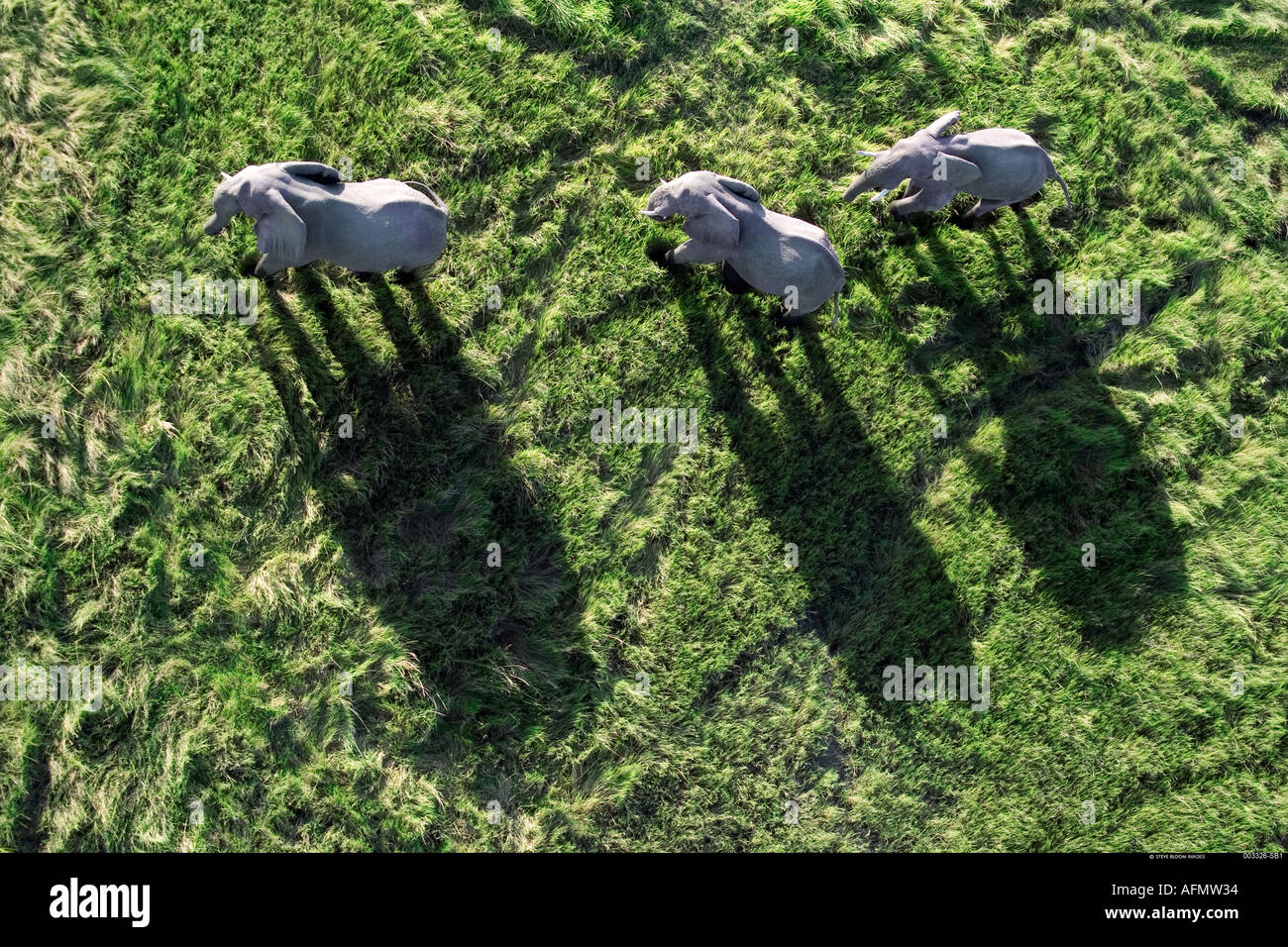 Aerial view of three Elephants casting shadows Okavango Delta Botswana - Stock Image