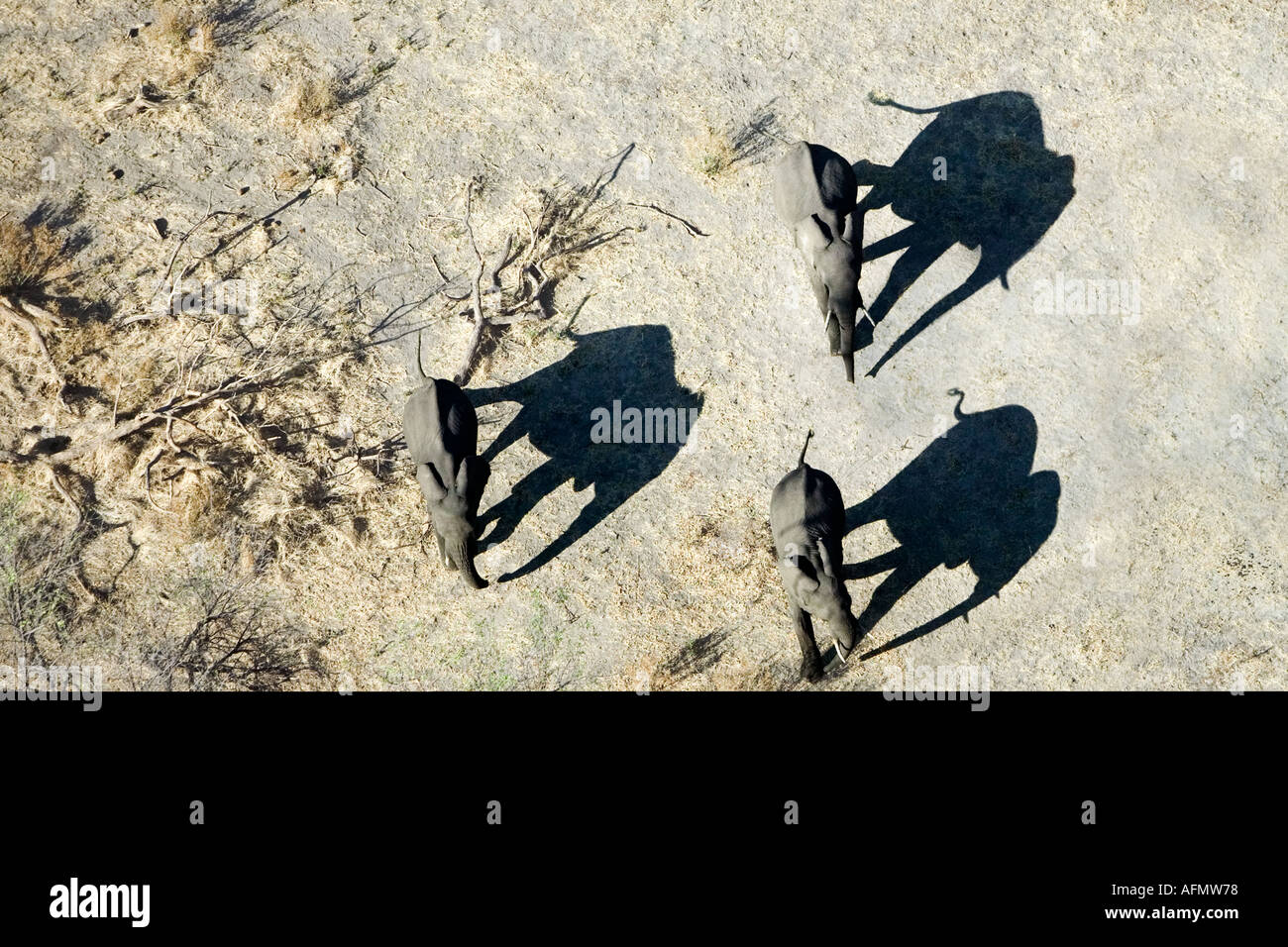 Aerial view of elephants and shadows Amboseli National Park Kenya - Stock Image