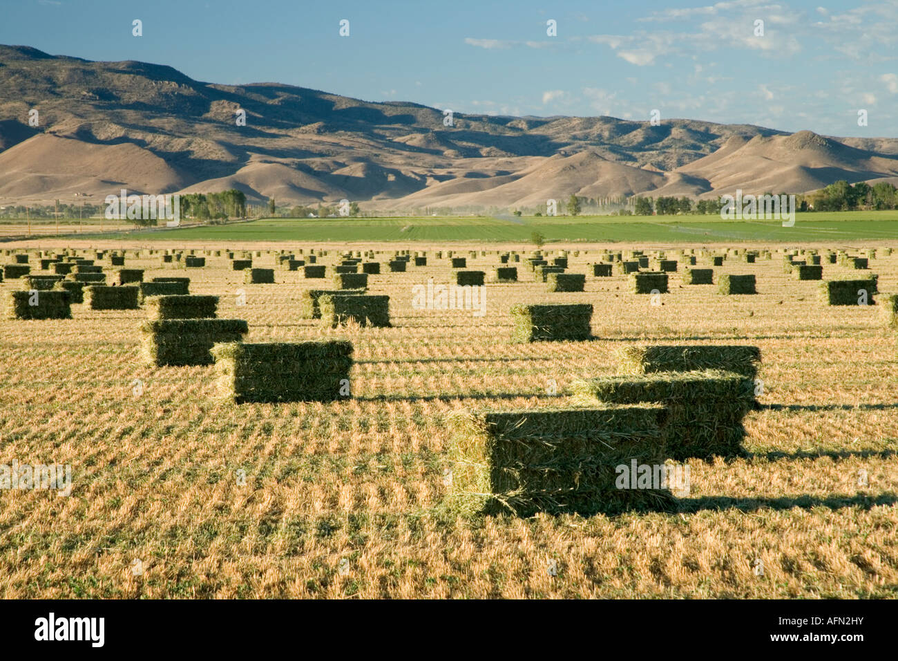Bales of harvested grass hay, Nevada - Stock Image