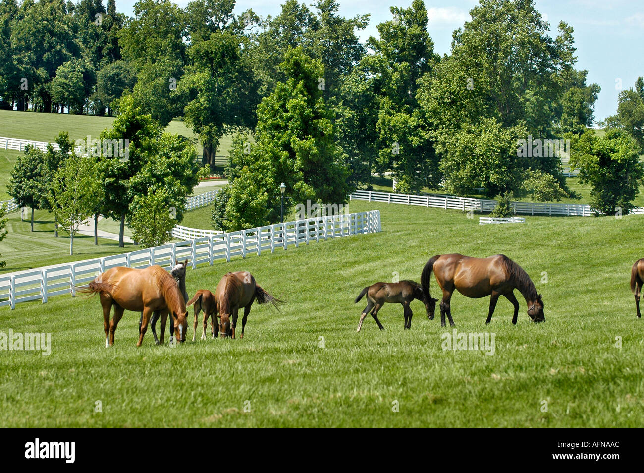 Image result for Horse Farm