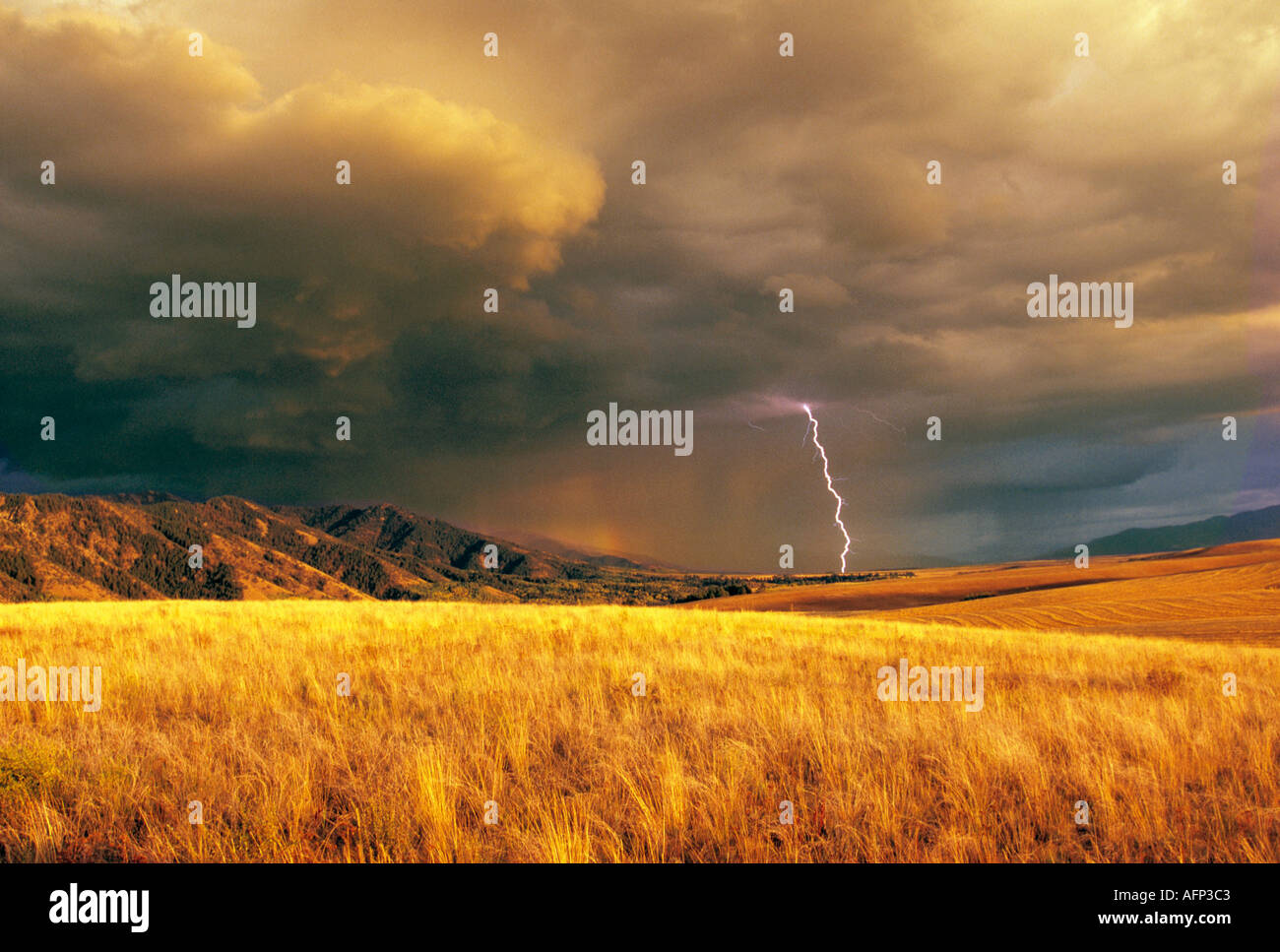Steve Bly Stock Photos & Images, Steve Bly Stock Photography - Alamy