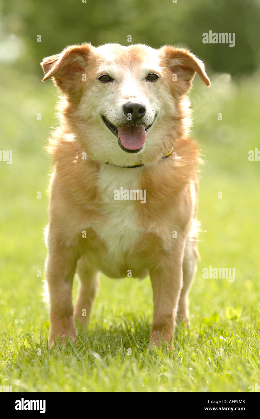 dog - Stock Image
