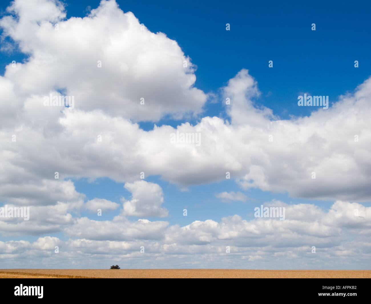 BLUE SKY and CUMULUS CLOUDS England UK - Stock Image