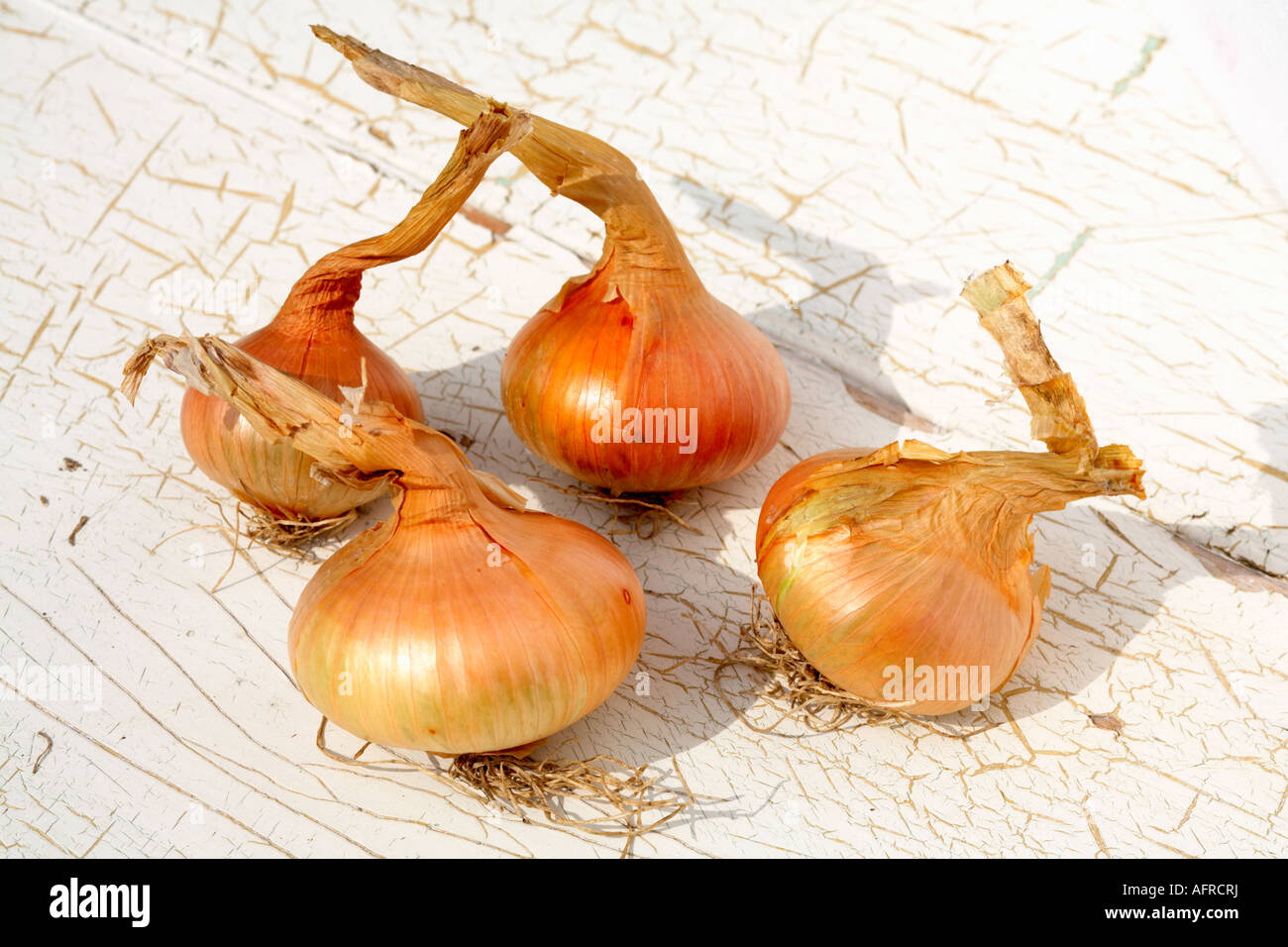Four Onions Onion Stuttgarter variety flat onion outside - Stock Image