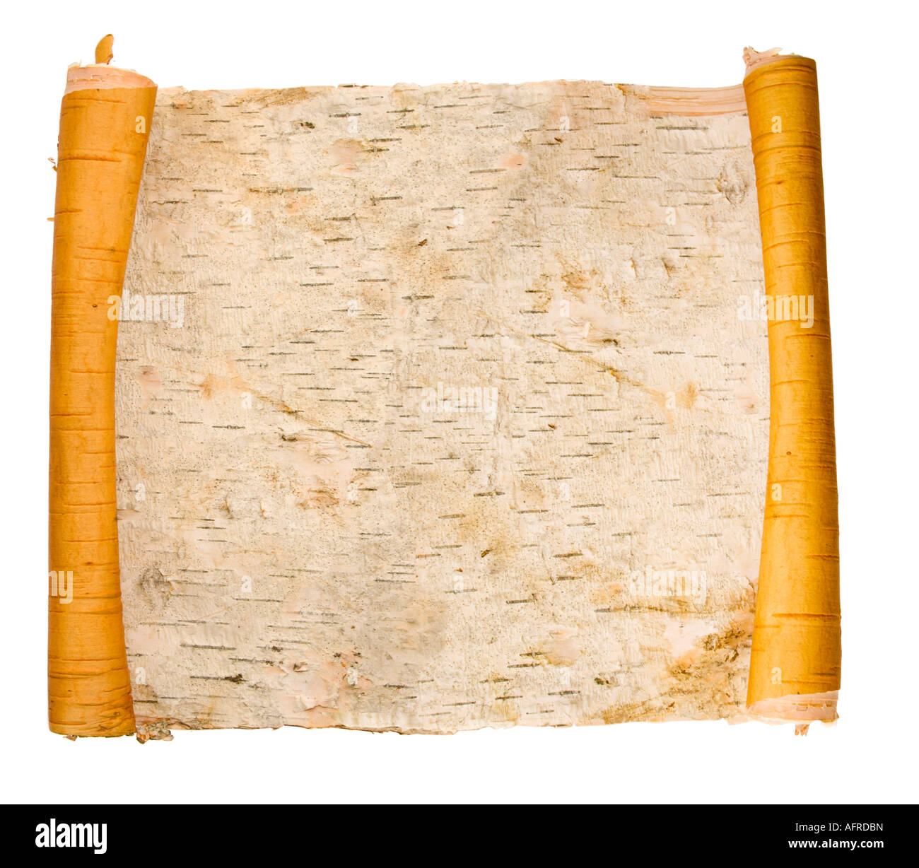 expanded birchen bark scroll isolated on white - Stock Image