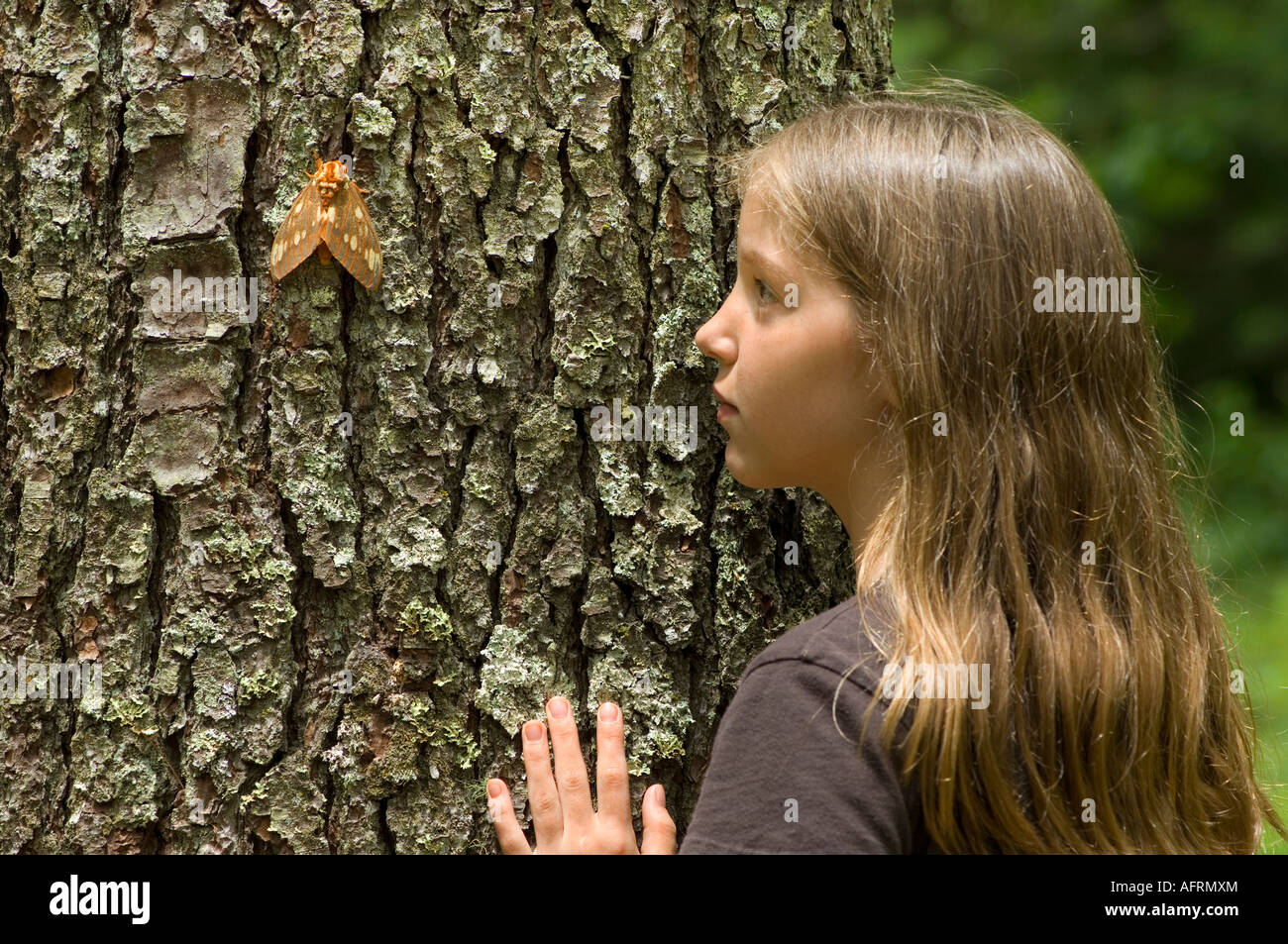Young girl observing Black Royal Walnut Moth  Deciduous forest E USA, by Bill Lea/Dembinsky Photo Assoc - Stock Image