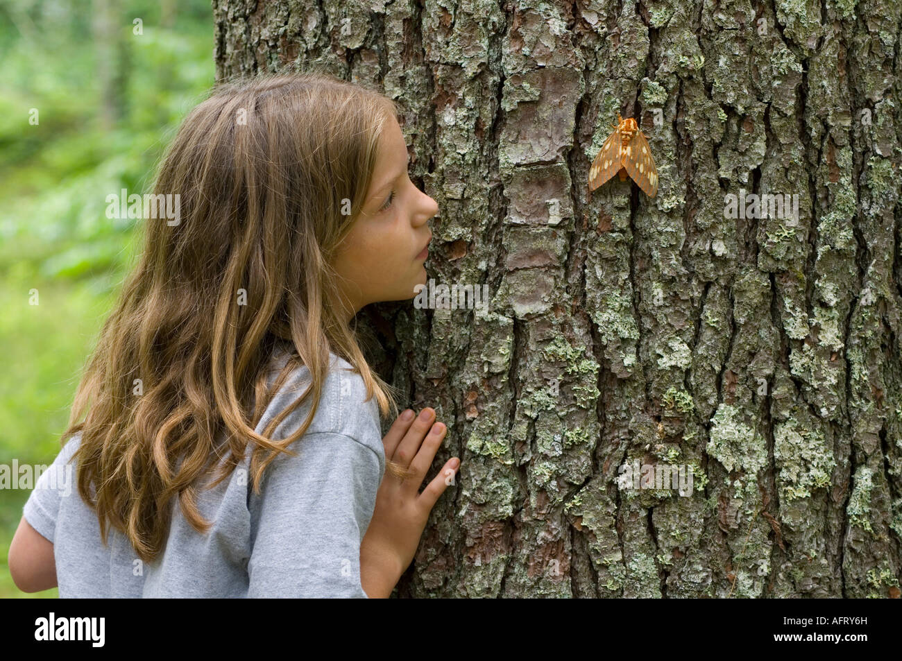 Young girl observing Black Royal Walnut Moth  Deciduous forest E USA - Stock Image