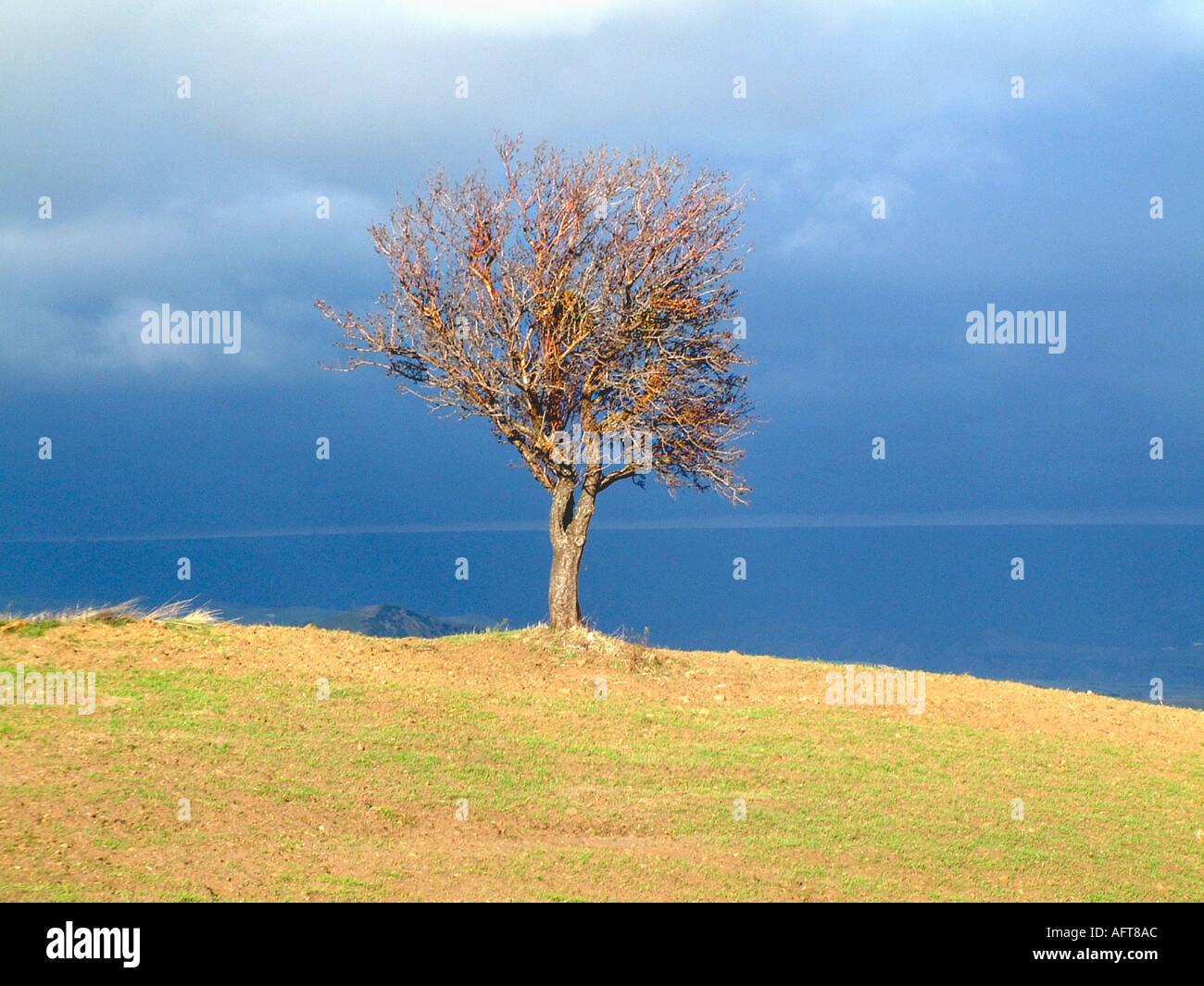 Tree overlooking the coast in Basilicata Italy - Stock Image
