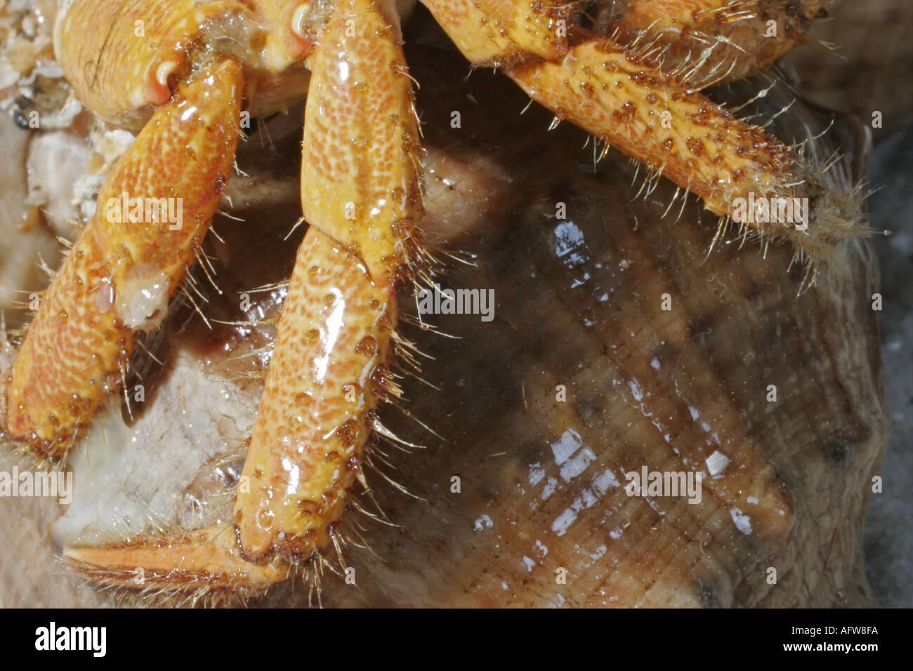 Krabbe - Stock Image