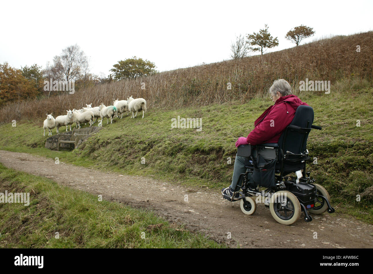 A wheelchair user on an adapted footpath running along the Malvern Hills in Worcesterhire England UK - Stock Image