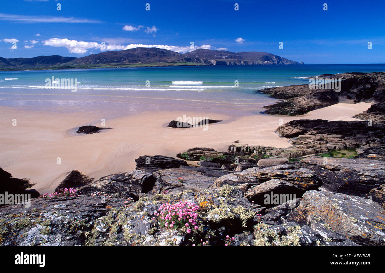 Thrift and rocks beside Tramore Strand, Rosbeg, County Donegal, Ireland - Stock Image