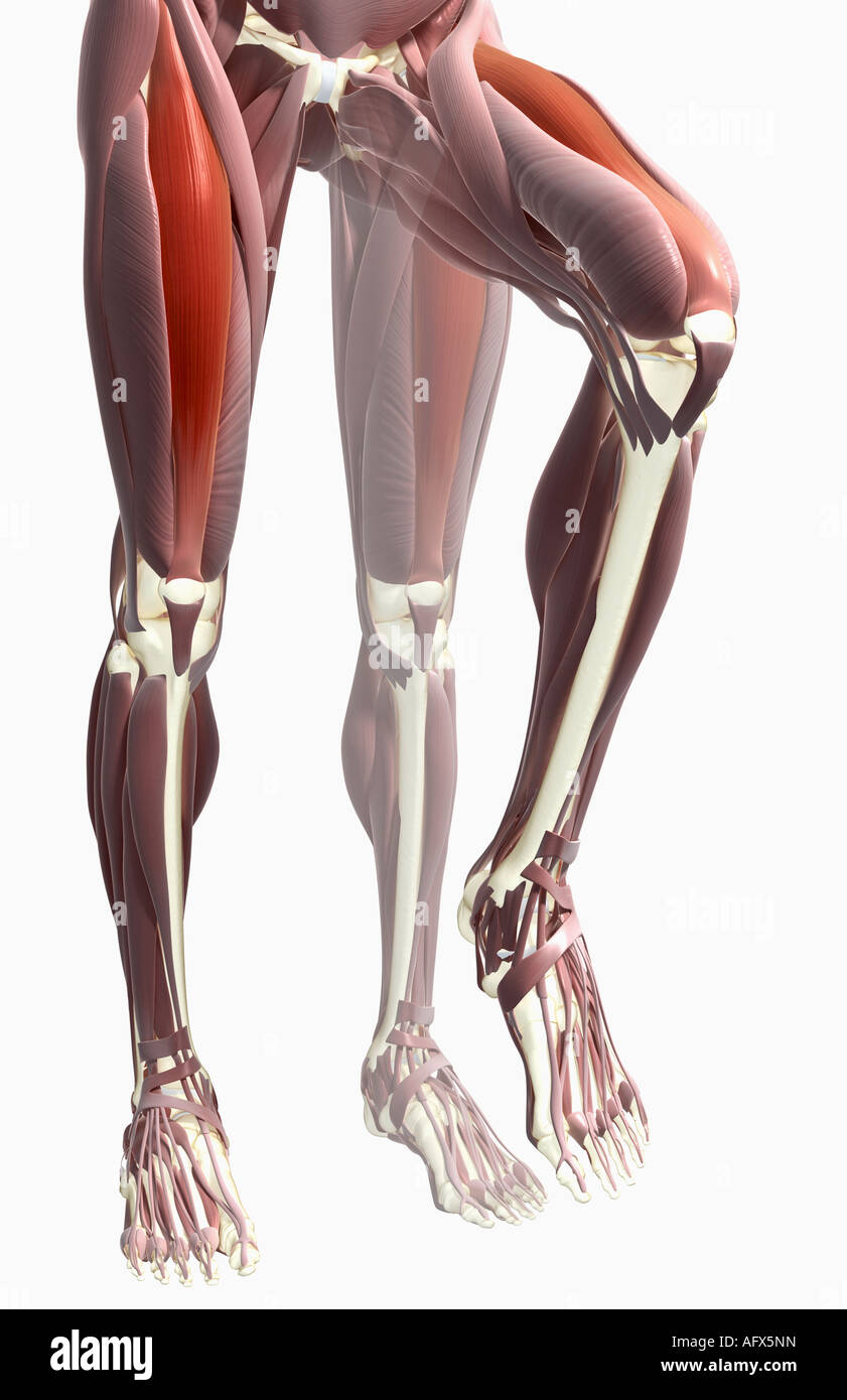 Flexion Anatomy