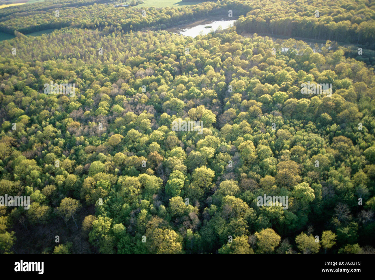 aerial view ,aerien,aerial,vue aerienne, forets yonne/loiret france Stock Photo