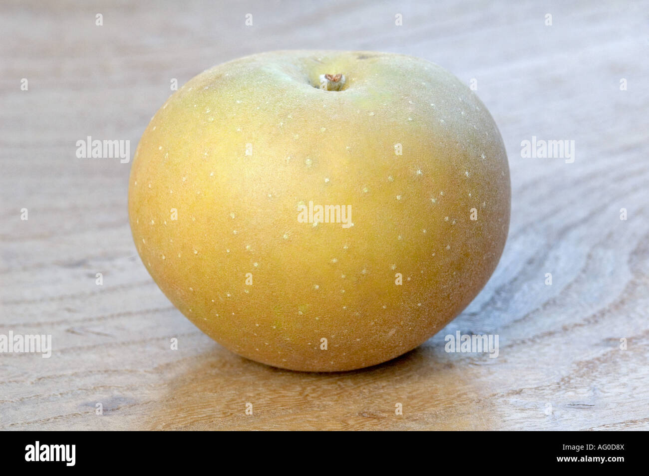 Single Egremont Russet apple on grained wood - Stock Image