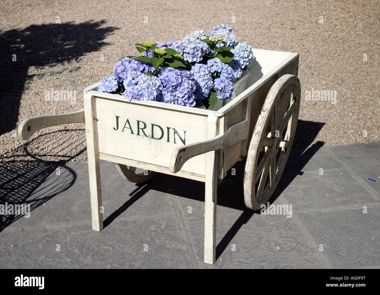 ornamental wheelbarrow with blue hydrangeas - Stock Image