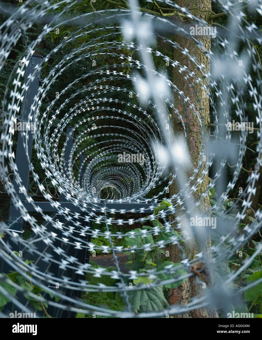 Razor wire on a security fence - Stock Image