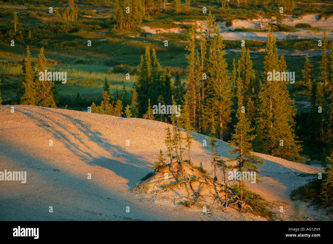 Last light on forested eskers near Whitefish lake, at the head waters of the Thelon river in the Northwest Territories, Canada. - Stock Image