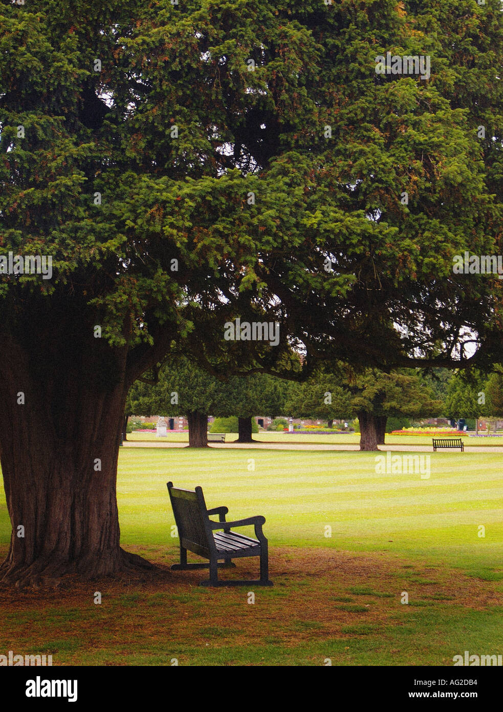 park bench under tree - Stock Image