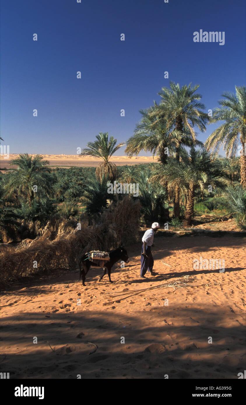 Algeria Timimoun Man walking with donkey in Sahara - Stock Image