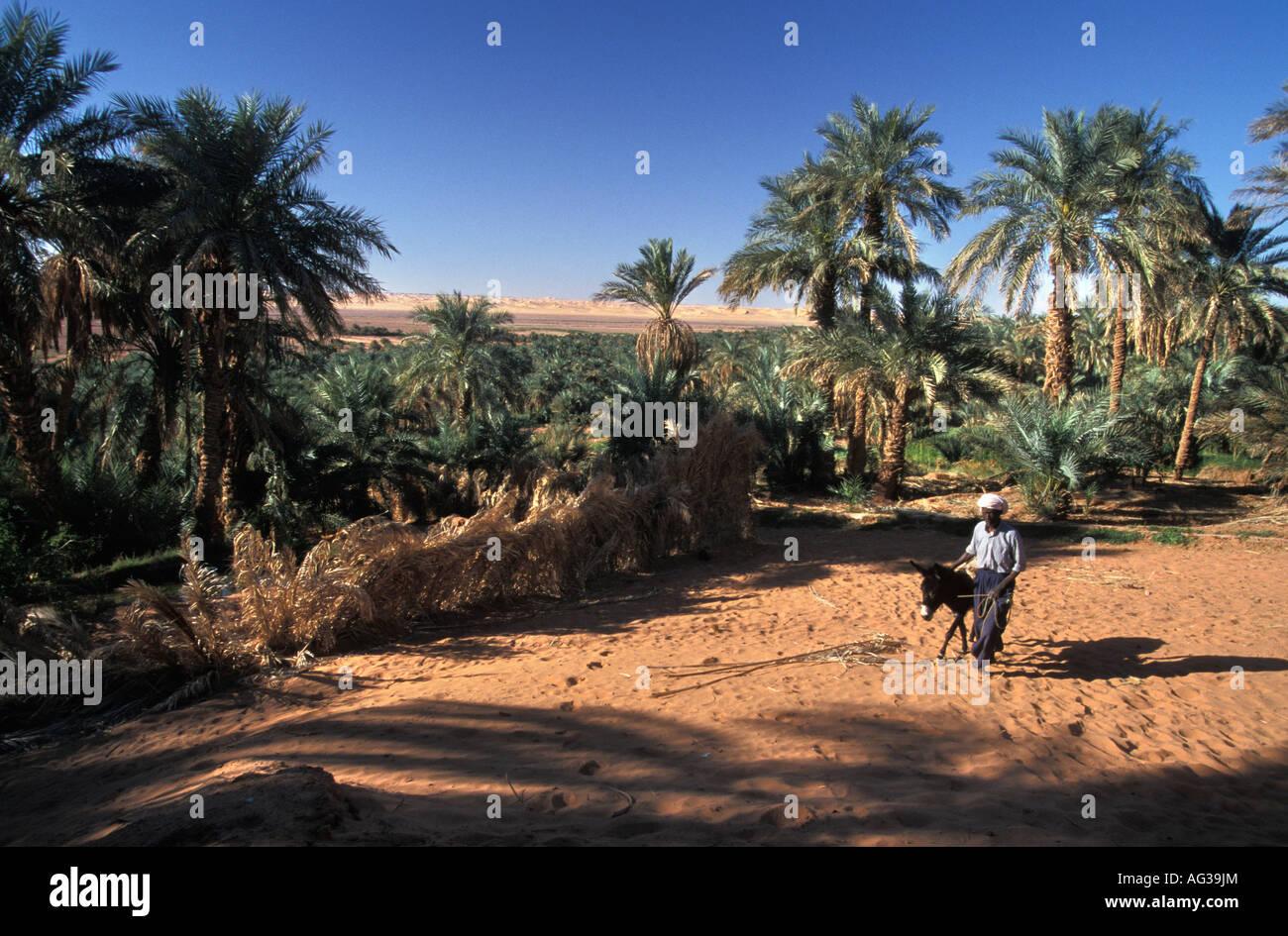 Algeria Timimoun Man walking with donkey - Stock Image