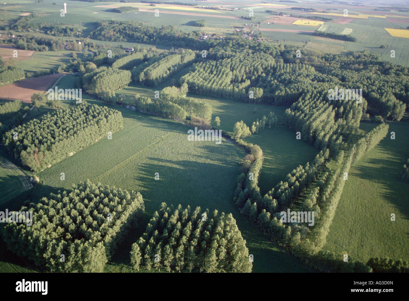 aerial view ,aerien,aerial,vue aerienne, plantations de peupliers loiret france Stock Photo