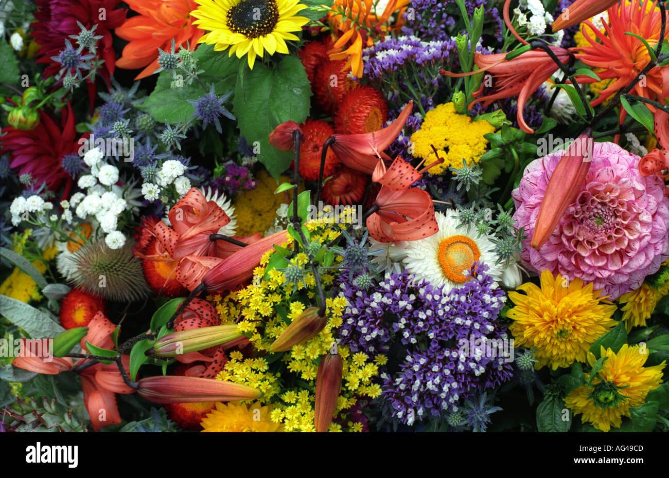 Mixed Bunch Of Spring Flowers Tasmania Australia Australian 1765