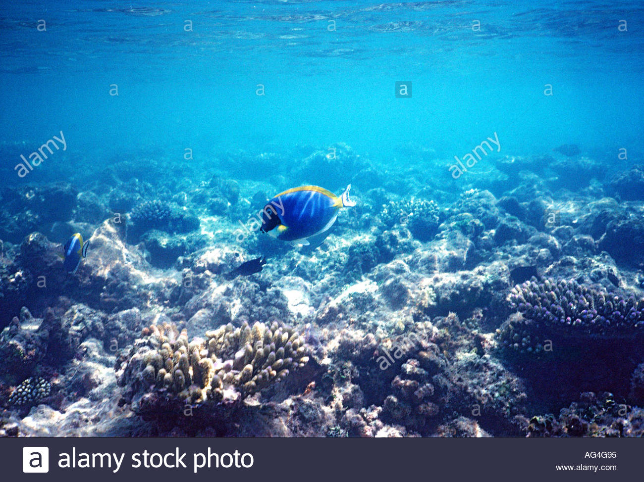 Tropical fish underwater - Stock Image