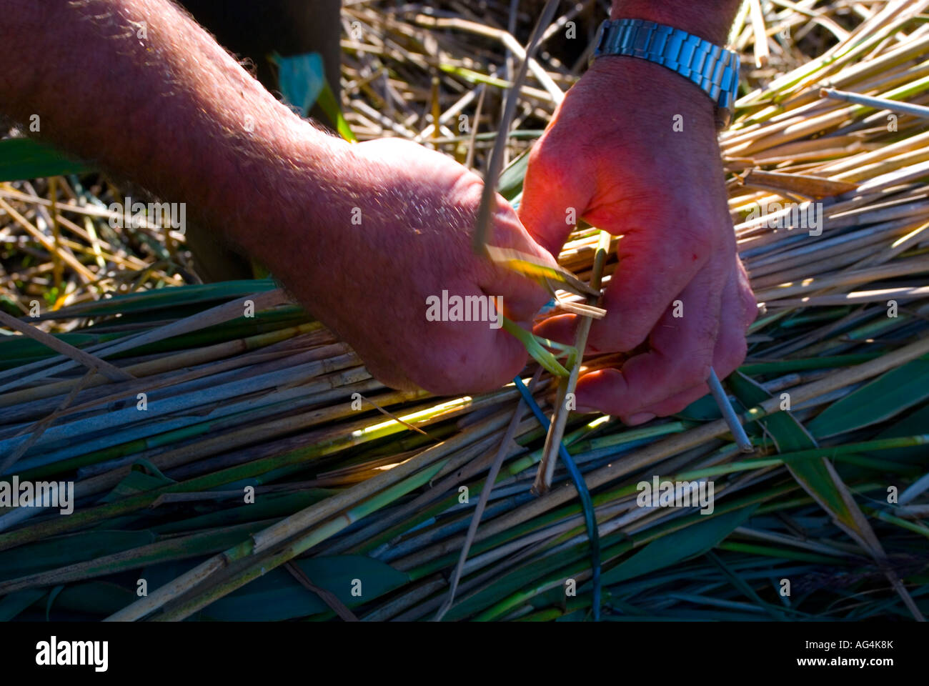 County Donegal Ireland Tying up reeds to be used in thatching - Stock Image
