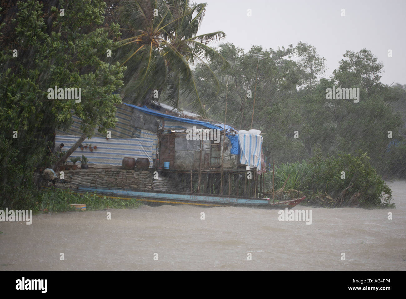 Tropical storm rain and wind Mekong Delta Vietnam - Stock Image