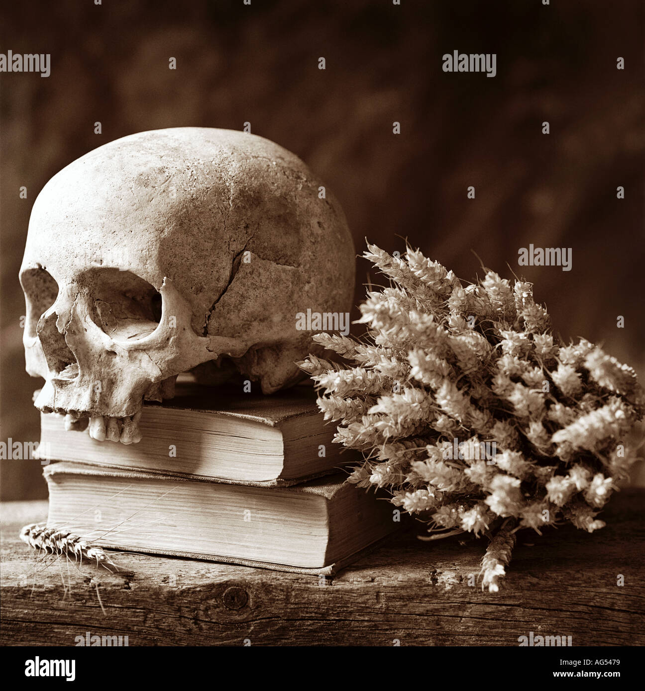 poetry litterature life death phylosophy skull thinking hamlet shakespear human - Stock Image