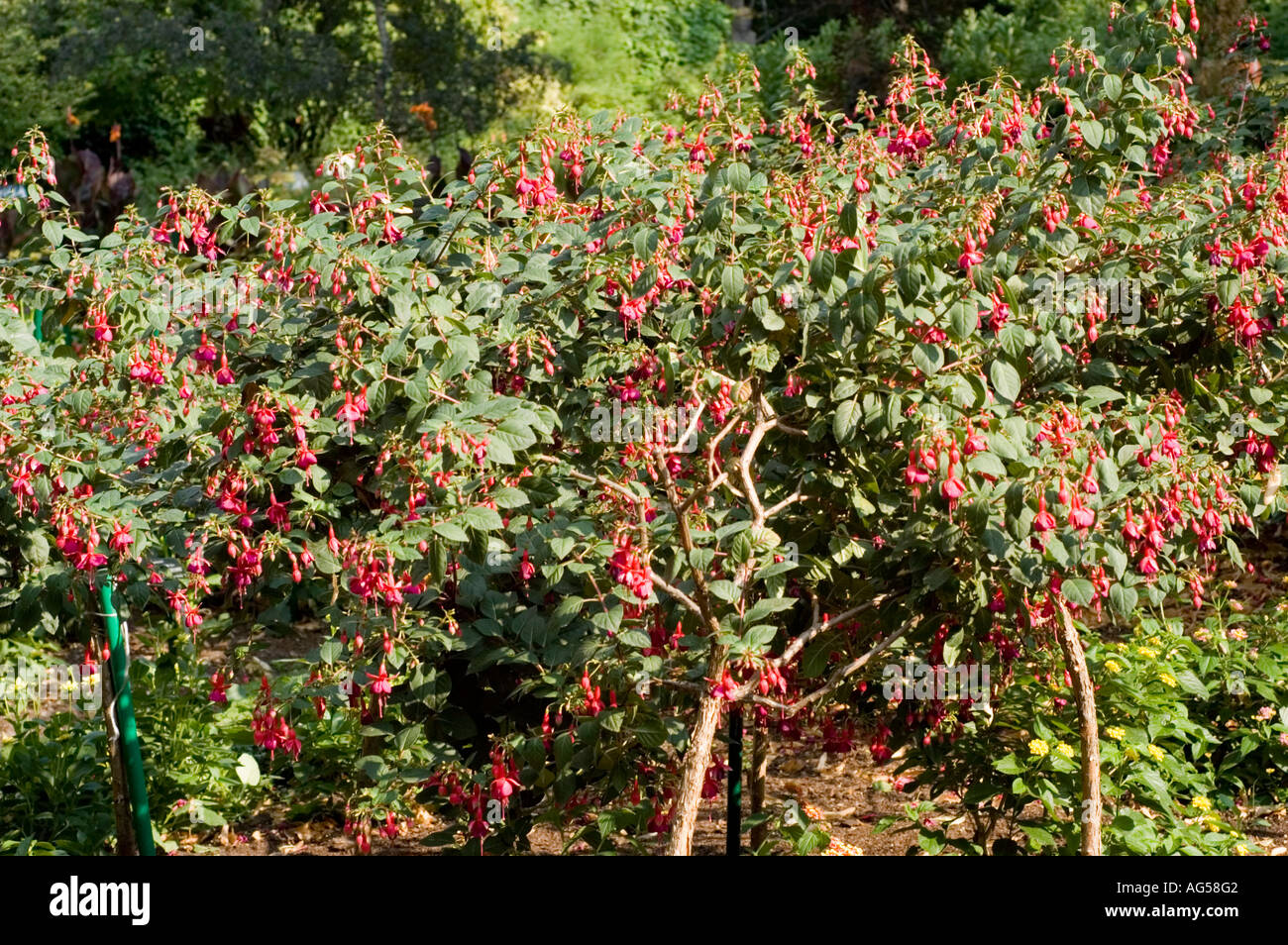 Tree Busch Stock Photos & Tree Busch Stock Images - Alamy