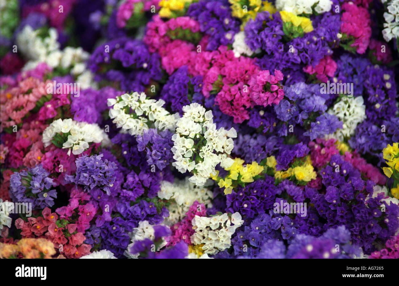 Mixes Bunch Of Spring Flowers Tasmania Australia 1750 Stock Photo